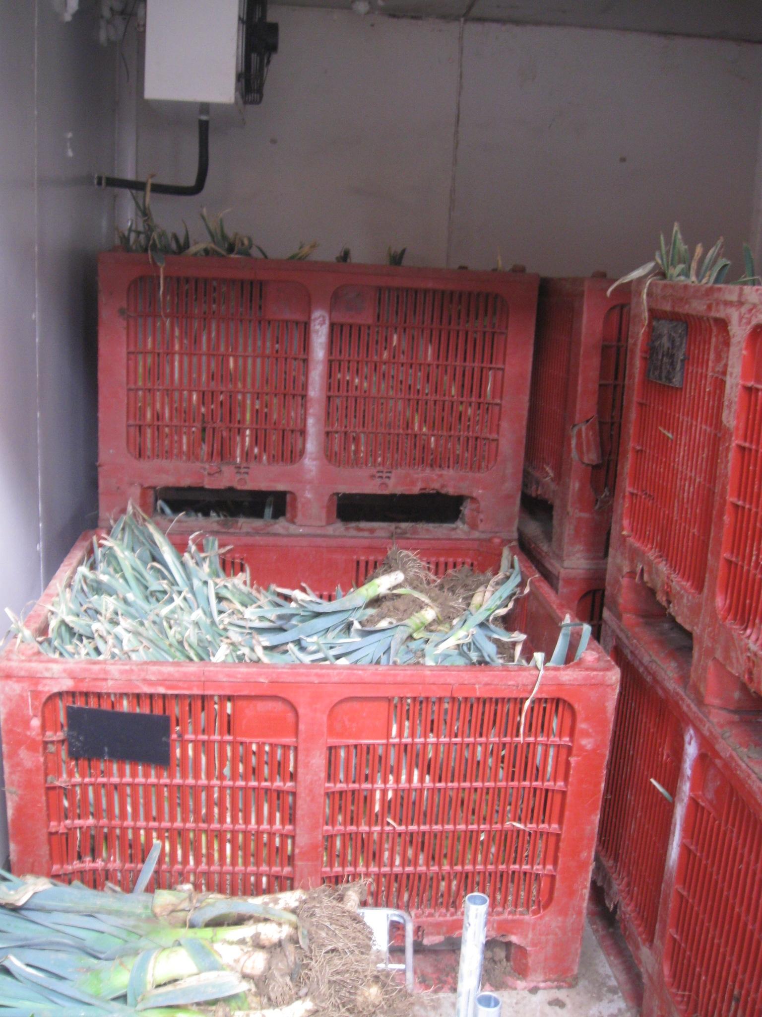 stockage des poireaux